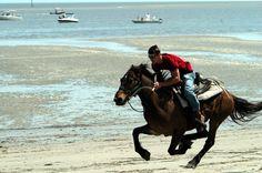 Marsh tacky races deemed a success on Daufuskie | Local News | The Island Packet