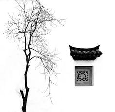 Tree and window