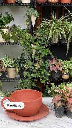 House Plants Decor, Plant Decor, Container Plants, Container Gardening, Garden Art, Garden Design, Love Wallpaper Backgrounds, Diy Crafts For Home Decor, Bonsai Plants