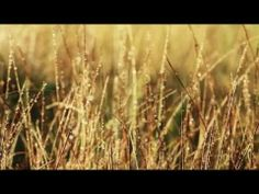 Damien Rice and Lisa Hannigan - Cold Water (Music Video)