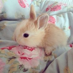 I want a bunny!!