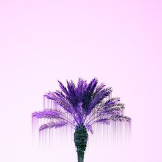 An abstract photo of a purple palm tree.