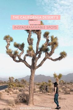 The top sites to see in Southern California desert, including giant cacti, dinosaurs and more stunning natural features - all just 2 hour drive from LA! Travel Guides, Travel Tips, Road Trip Usa, Usa Roadtrip, Usa Trip, San Francisco, Las Vegas Trip, United States Travel, California Travel