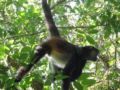 Ecotours Calakmul: Visitando Calakmul
