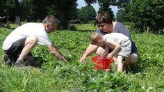 Corinne Mouchoux cultive, avec l'appui de son mari Michel, le Jardin du Bignon où légumes et fruits rouges sont en libre cueillette. Une autre façon de faire