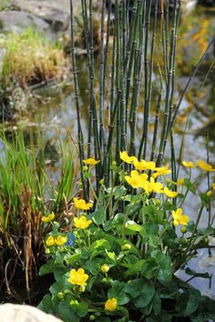 2014-04-22: at the pond