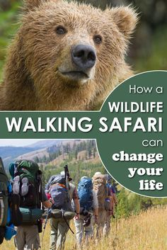 Watching wild animals on foot is an experience you'll never forget. Here is why taking a wildlife walking safari can change your life.