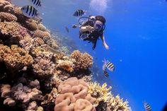 Scuba diving in Red Sea Hurgada Egypt