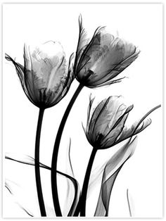 xray of flower - Google Search
