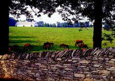 Stone fences are abundant in Kentucky. Future Farms, Stone Fence, Dry Stone, Stone Walls, Masons, Fences, Gates, Kentucky, Backyard
