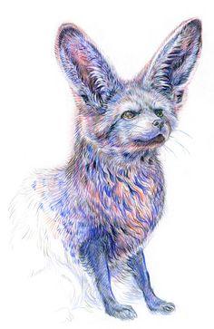 bat-eared-fox-aiyana-udesen