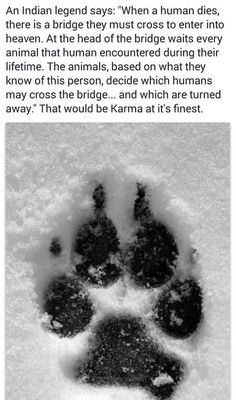 Wolf Paw-Print in the Snow. I Love Dogs, Puppy Love, Animals And Pets, Cute Animals, Photo Chat, Tier Fotos, Animal Kingdom, Animals Beautiful, Newfoundland