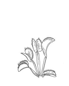 venus fly traps Garden Drawing, Plant Drawing, Pen Illustration, Ink Illustrations, Ink Pen Drawings, Cute Drawings, Line Art, Fly Drawing, Doodle Tattoo