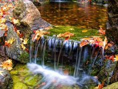 fall in the fall