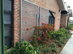 PROGRESS! The plants are really starting to climb the NatureScreen at the firehouse in Plantation, FL.
