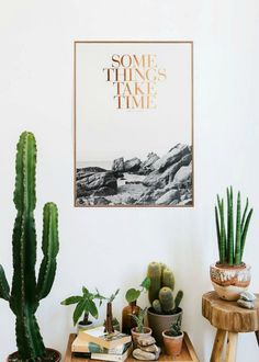 Indoor plants and cactus. An assortment of different house plants and foliage. Green rooms and rooms with potted plants. Indoor Garden, Indoor Plants, Home And Garden, Indoor Cactus, Potted Plants, Ficus Lyrata, Plantas Indoor, Cactus Plante, Cactus Y Suculentas