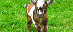 Sweet little baby Bella, just a few weeks old in 2010.