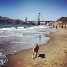 Baker Beach is also a good option for BBQing.