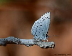 Pretty..., like the way the wings and branch appear to have similar markings