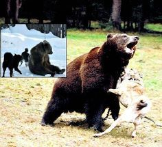 """Petition · Rescue Masha From """"Bear Baiting"""" Camp in Russia! · Change.org"""