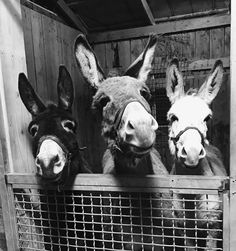 Holly A Kovach ~ Only Donkeys