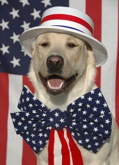 Love America, Love Our Dogs #AnimalPractice