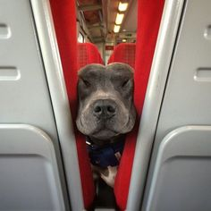 """I'm excited about our trip! But you have to admit, this train's a little cramped."""