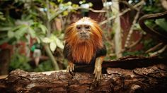 Unchecked forest loss puts scores of species at risk of extinction.