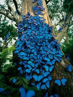 This was an HP magazine ad a looong time ago and I used it as the cover of my 3-ring binder for forever! so pretty...Butterflies, Amazonas Ec