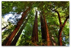 The beauty of Muir Woods National Park jumps out at you the moment you walk in the park. See more pics of this beautiful place and discover tips to visit.