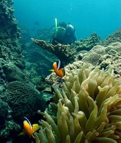 Enjoy diving in the sea of Oman