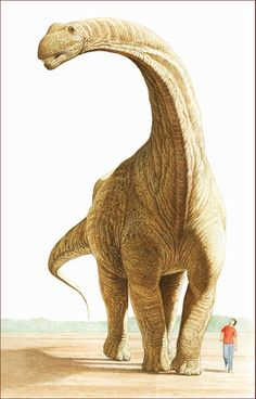 Argentinosaurus huinculensis compared to a human. By Aldo Chiappe