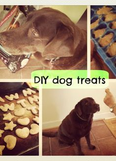 DIY Dog Treats! 3 recipes that you can make on the cheap with easy to find ingredients and minimal work! And the dogs LOVE them!