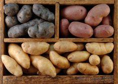 Правильное хранение картофеля