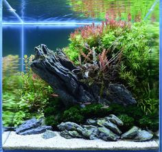 Submit your planted tank on Aquascape Awards to participate in our aquarium design contest. Visit Aquascape Awards for aquascape aquarium design ideas and inspiration.