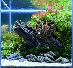 Nano aquarium #aquascape