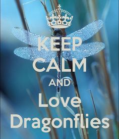 KEEP CALM AND Love Dragonflies