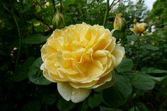 P1000414.jpeg - A trip in a beautiful garden villa