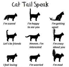 Understand cat tail speak..........