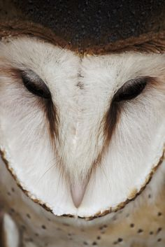 Beautiful Owl - #PleaseComeCloser  Zoom In - Close Up -Animals - Nature