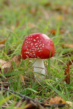 A toadstool found on the Arboretum walk at West Dean Gardens near Chichester Chichester West Sussex, Sunken Garden, Dean, Pergola, Restoration, Places To Visit, Gardens, Autumn, Fall Season
