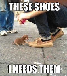 You have your paws to walk on, so keep on walking! These shoes are mine.