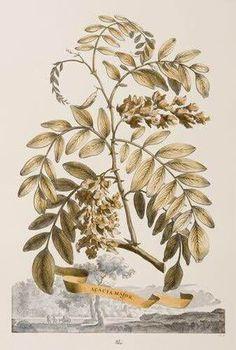 Ferreri Botanical Series (A)