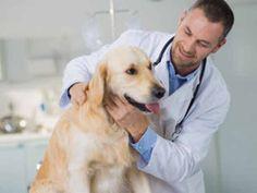 Schilddrüsenunterfunktion beim Hund: Daran erkennen Sie sie