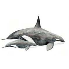 gorgeous watercolor paintings of animals | Killer whale Original Watercolor painting fine art artwork wall home d ...
