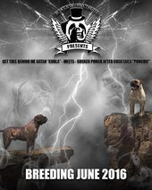 On The Black River Bullmastiffs Website You Will Be Introduced