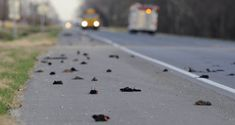 Mass animal die-offs are not uncommon - The Portland Press Herald ...