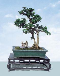 Carmona microphylla(Fukien Tea) by Yee-Sun Wu.