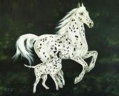 Horse and dalmation