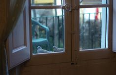 Tourterelles by Stephanie Sant on 500px